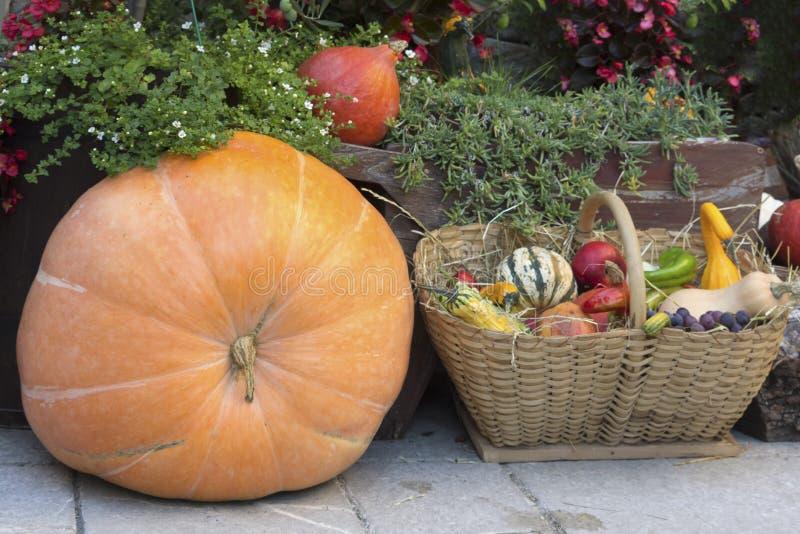 Zusammenstellung von den bunten Kürbisen typisch für Herbst lizenzfreie stockbilder