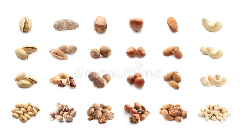 Zusammenstellung von geschmackvollen Nüssen auf weißem Hintergrund stockfotografie