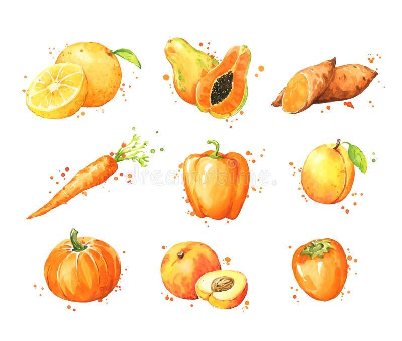 Zusammenstellung von orange Nahrungsmitteln, von Aquarellfrucht und von vegtables vektor abbildung