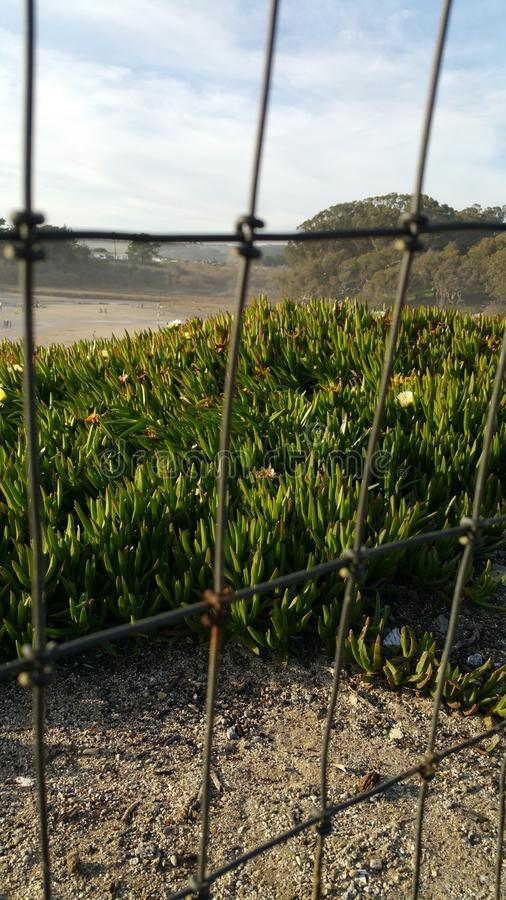 Zustandsstrand in Santa Cruz lizenzfreie stockbilder