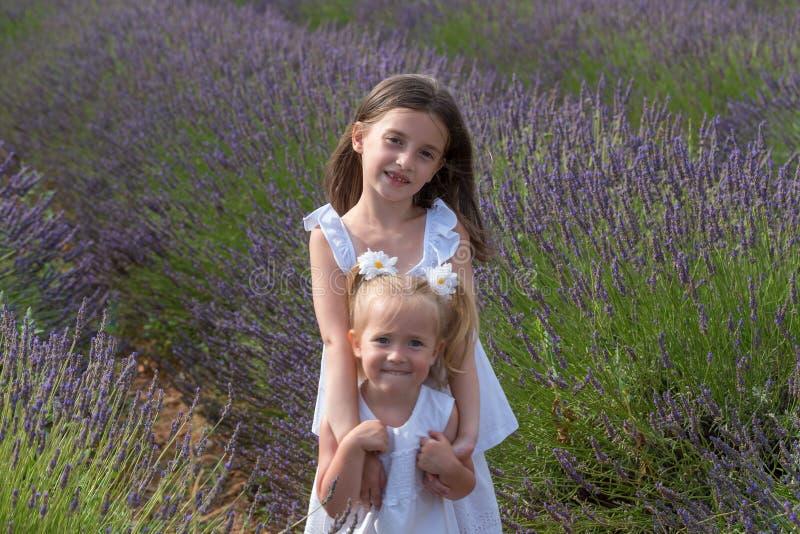 Zusters op bloemengebied van lavendel stock foto