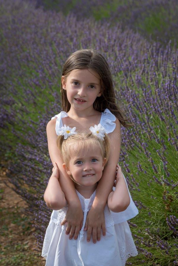 Zusters op bloemengebied van lavendel royalty-vrije stock fotografie