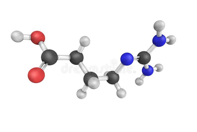 Zuur gamma-Guanidinobutyric, als 4-Guanidinobutanoate ook wordt bekend die, royalty-vrije stock afbeeldingen