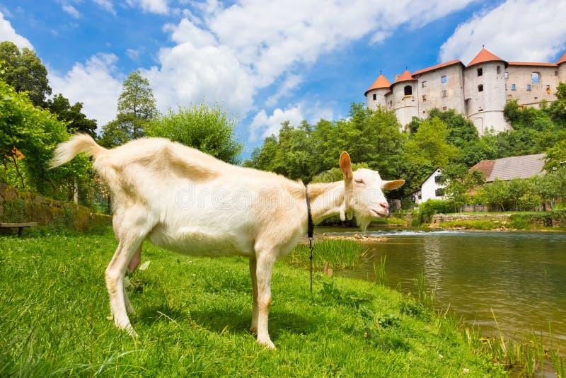 Zuzemberk-Schloss, slowenisch touristischer Bestimmungsort stockfotos