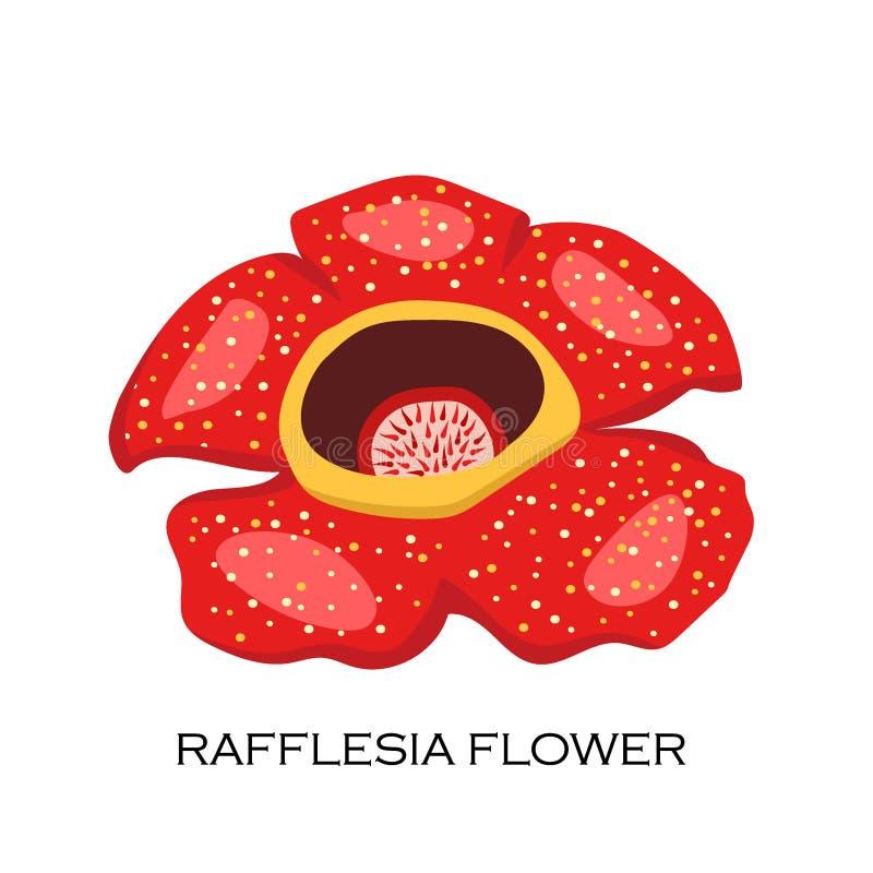 Zwłoki kwiatu Rafflesia arnoldii Malezyjski symbol royalty ilustracja
