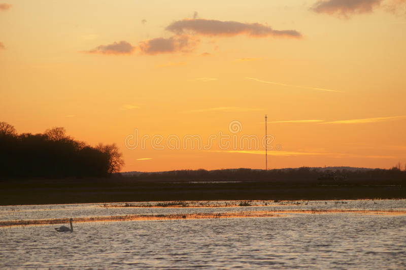 Zwaan bij zonsondergang royalty-vrije stock foto's