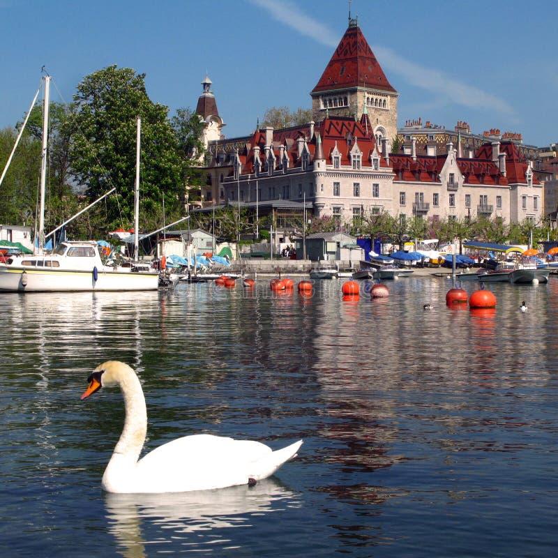 Zwaan en Chateau d'Ouchy 05, Lausanne, Zwitserland royalty-vrije stock foto's