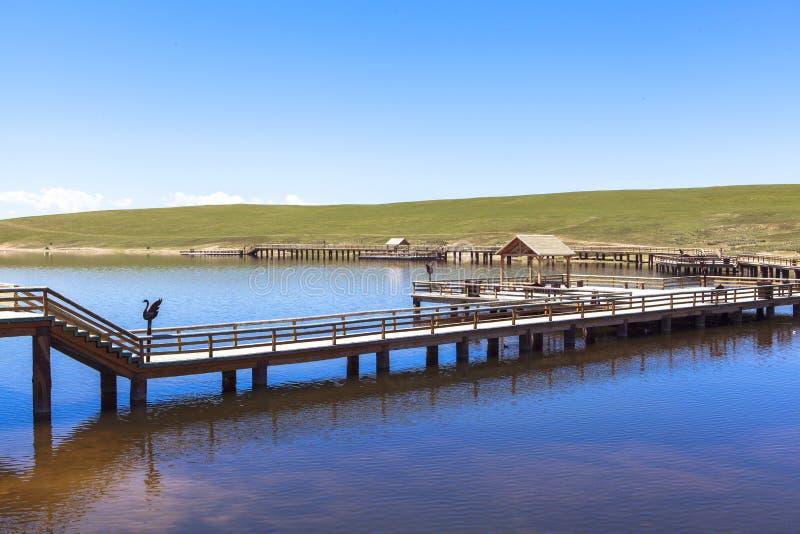 Zwaanmeer in Bayanbulak-Weiden in Xinjiang royalty-vrije stock afbeeldingen