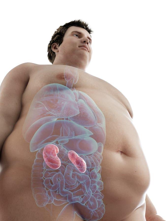 zwaarlijvig bemant nieren royalty-vrije illustratie