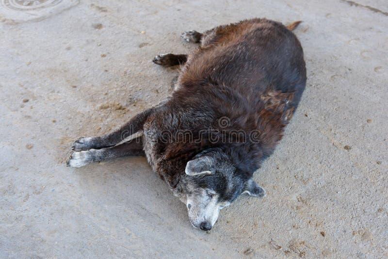 Zwaarlijvige hondenslaap royalty-vrije stock foto