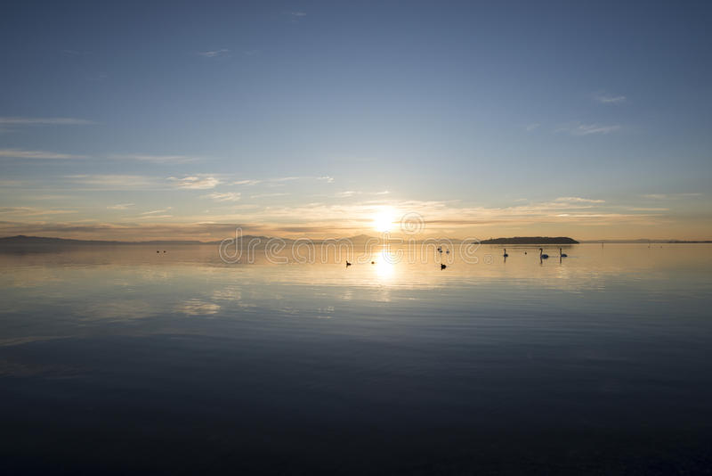 Zwanen bij mooie zonsonderganghemel royalty-vrije stock fotografie