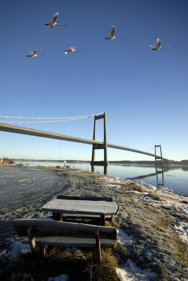 Zwanen en brug stock afbeeldingen