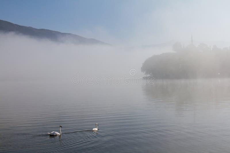 Zwanen en moskee op nevelige ochtend op het meer van Ioannina, Griekenland stock foto
