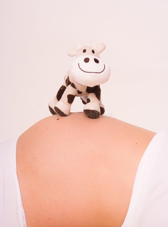 Zwanger met koe stock foto