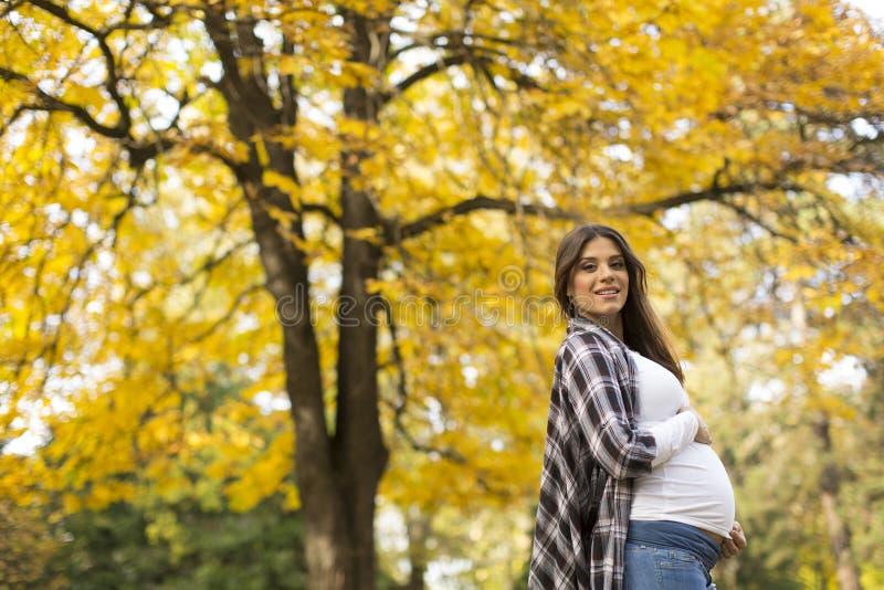 Zwangere vrouw in het de herfstpark royalty-vrije stock afbeelding
