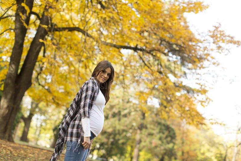 Zwangere vrouw in het de herfstpark royalty-vrije stock afbeeldingen