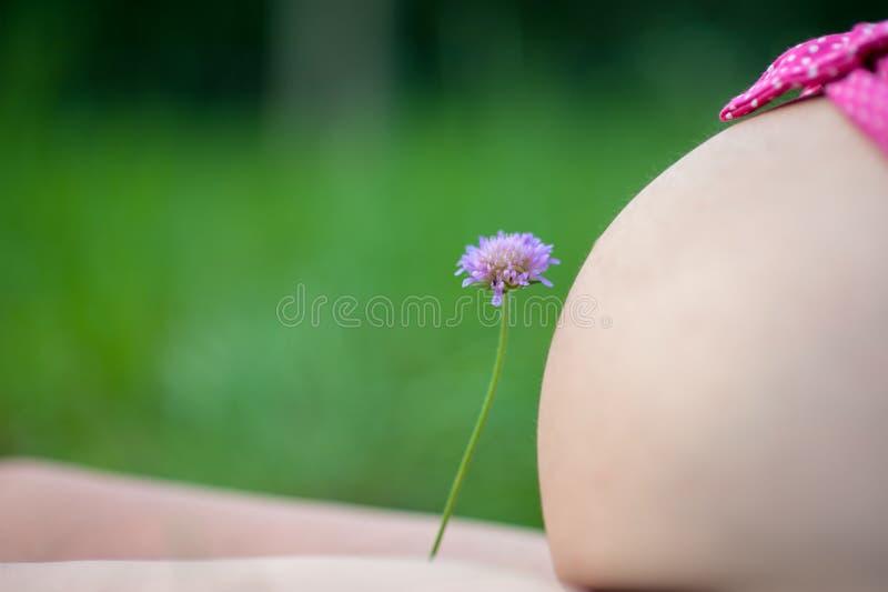 Zwangerschap en aard, baby binnen de buik in aard stock fotografie