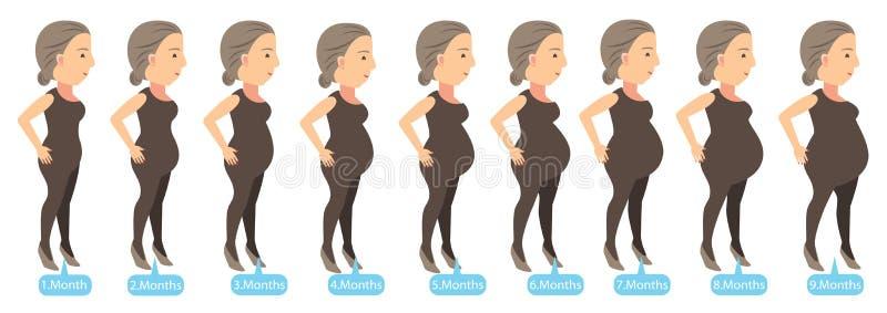 Zwangerschapsstadia vector illustratie