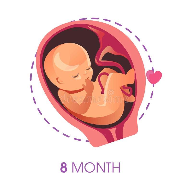 Zwangerschapsstadium 9 maandembryo in baarmoeder met ontwikkeling van het de groeifoetus van de navelstreng de vector ongeboren b vector illustratie