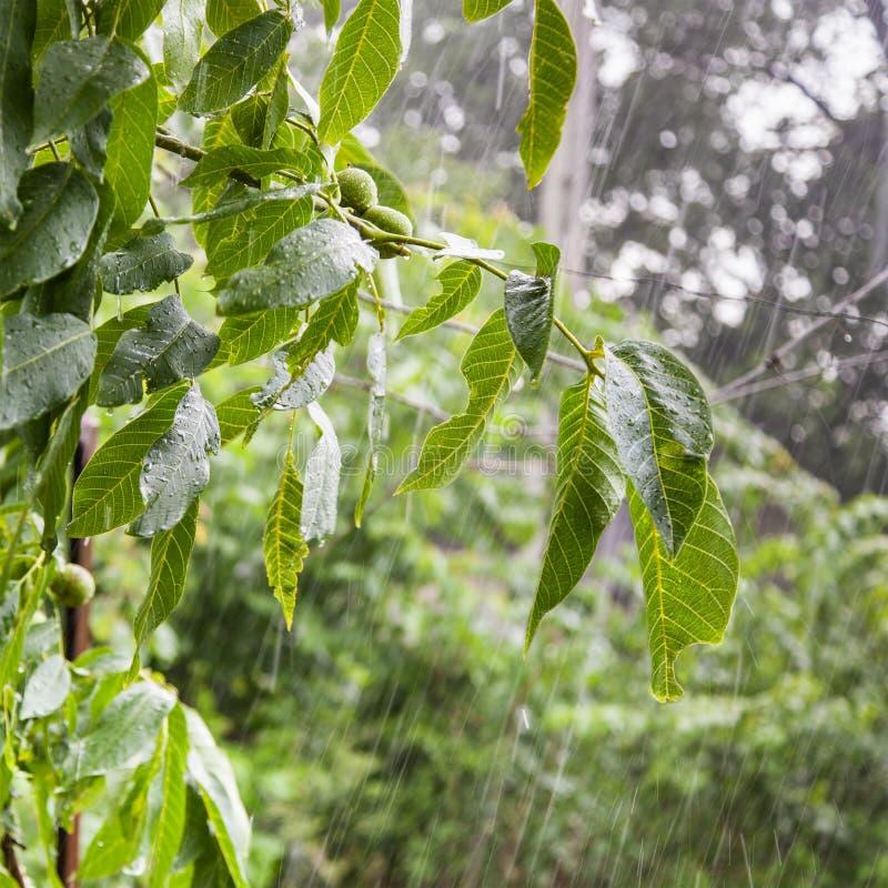 Zware regen in de tuin stock foto's