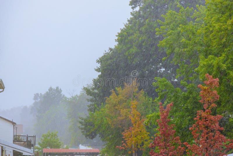 Zware regen van groen bomenlandschap in de dalingen van de de herfstregen royalty-vrije stock foto's