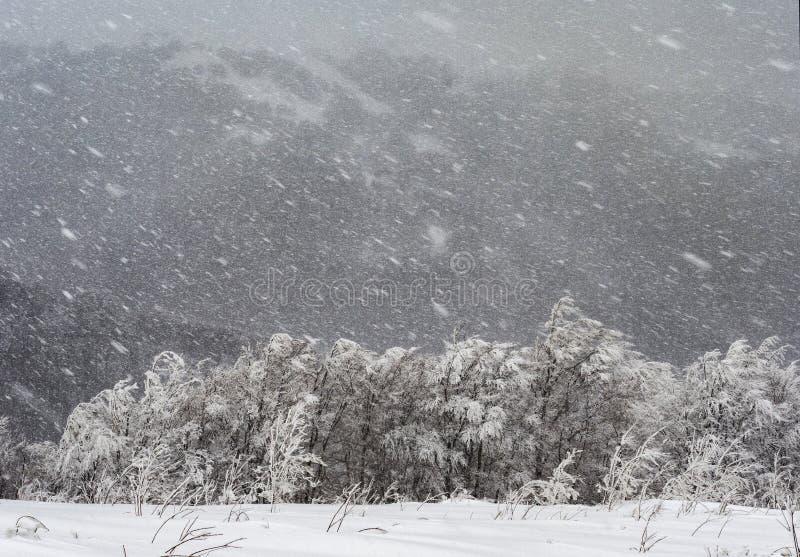 Zware sneeuwval en sterke wind royalty-vrije stock foto