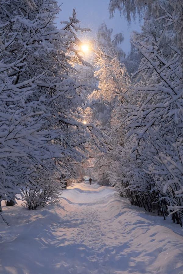 Zware sneeuwval in Moskou Nachtmening van parken en wegen tijdens een sneeuwval Instorting van openbare diensten stock fotografie