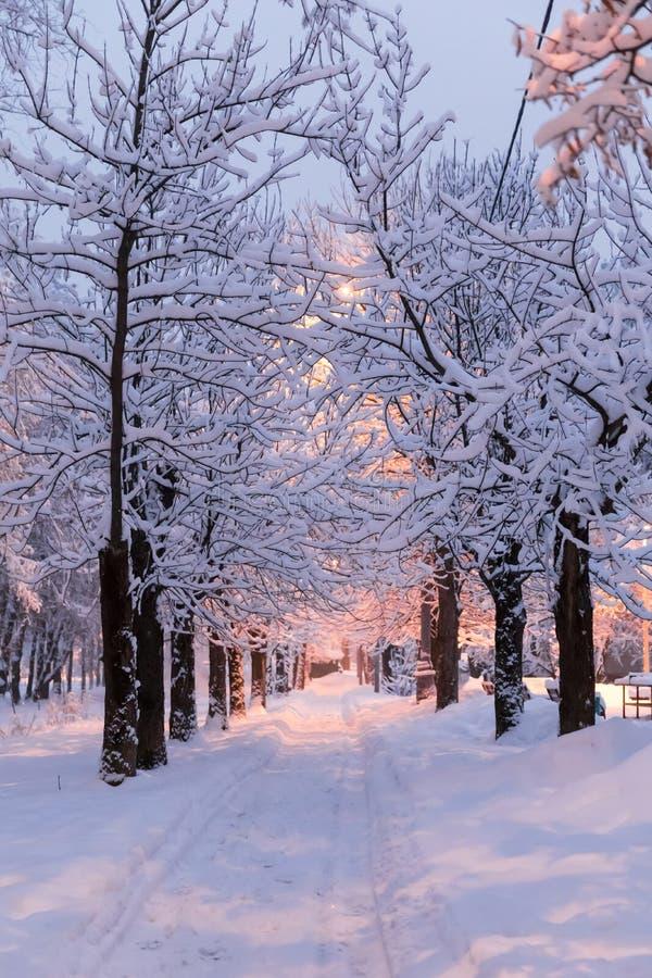 Zware sneeuwval in Moskou Nachtmening van parken en wegen tijdens een sneeuwval Instorting van openbare diensten stock afbeeldingen