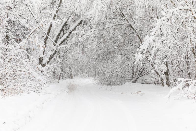 Zware sneeuwval in Moskou Snow-covered wegen en gevallen bomen tijdens een sneeuwval Instorting van openbaar vervoer stock foto
