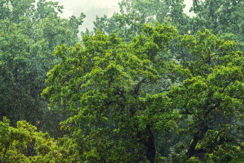 Zware stortbui over groene tropische bosbomen De herfstweer van de stortbuistortbui stock afbeeldingen