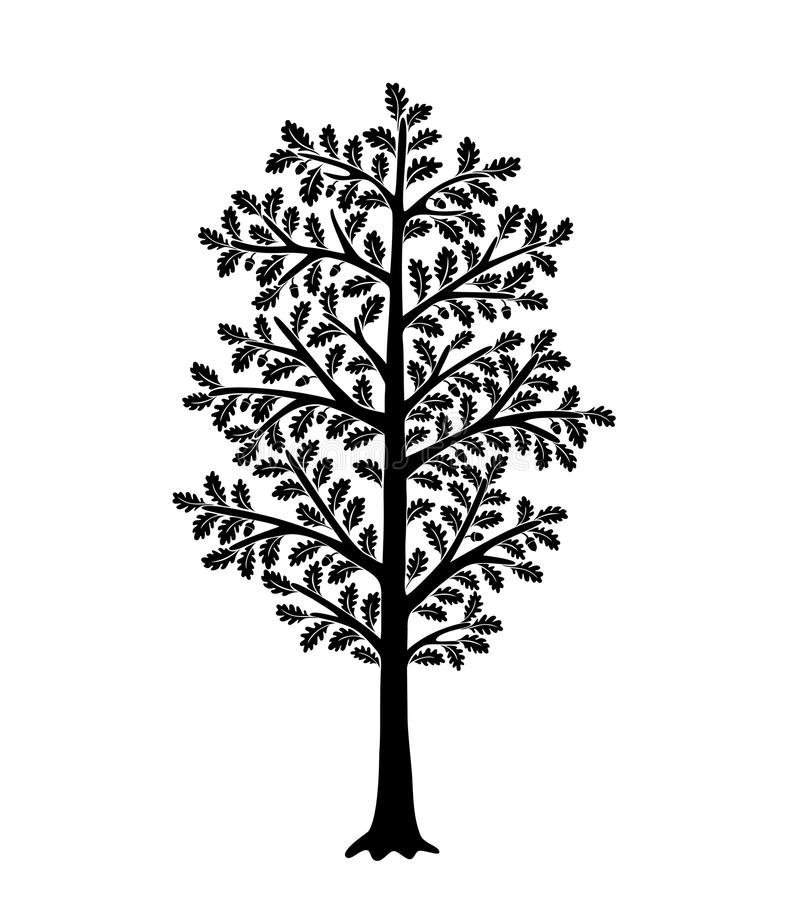 Zwart boomsilhouet dat op witte achtergrond wordt geïsoleerdo Eik met bladeren in eikels vector illustratie
