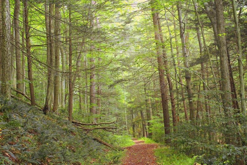 Zwart Forest Trail ( Revisited) ( 17) stock fotografie