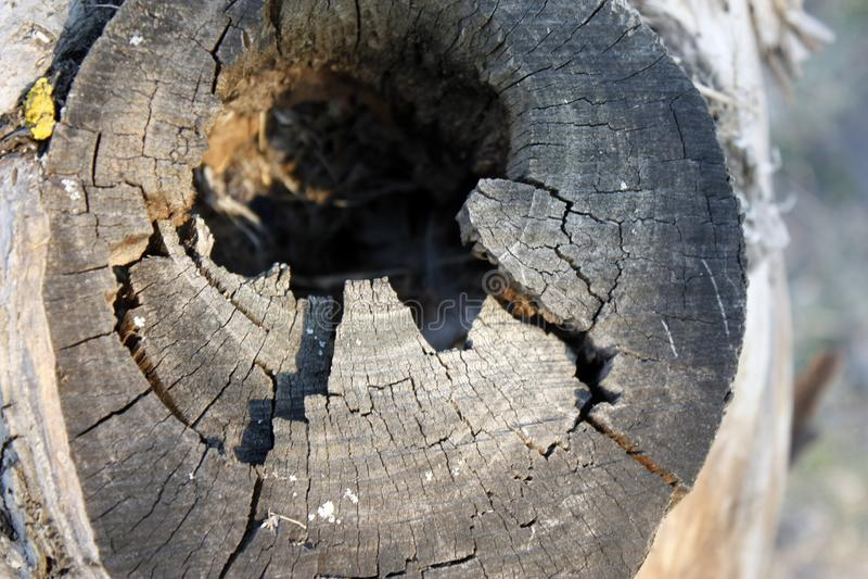 Zwart gat in een boomboomstam, de ingang aan bird& x27; s het nest is een oude boom, schors stock foto's
