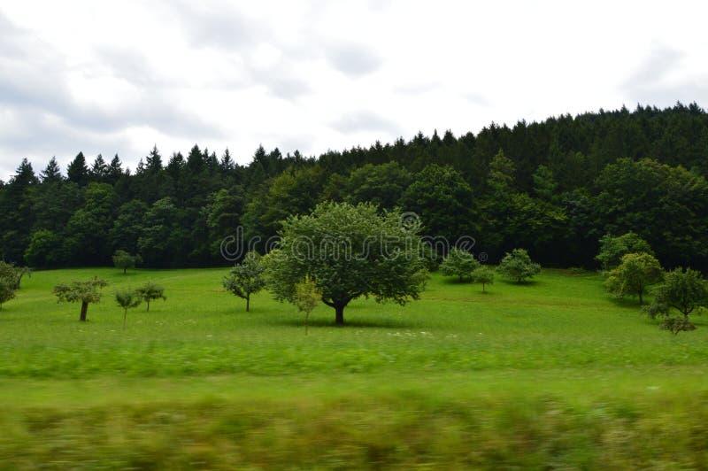 Zwart houten bos royalty-vrije stock foto