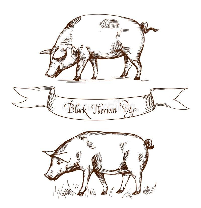 Zwart Iberisch varken Vectorillustratie in uitstekende gravurestijl Kan als grunge etiket of stickerbeeld worden gebruikt royalty-vrije illustratie