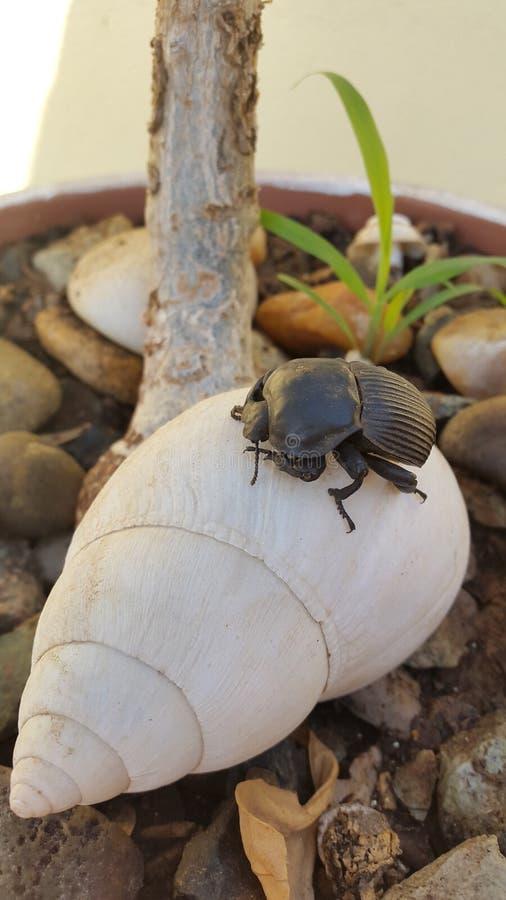 Zwart insect royalty-vrije stock afbeeldingen