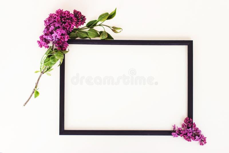 Zwart kader, lilac bloemen op witte achtergrond stock afbeeldingen