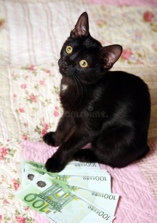 Zwart katje stock afbeeldingen