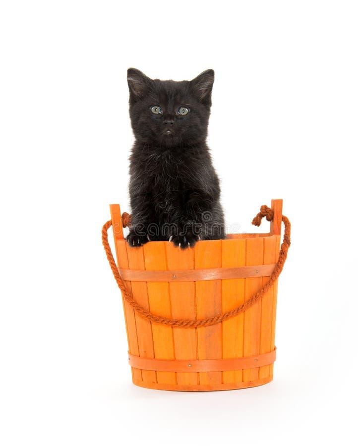 Zwart katje en oranje emmer royalty-vrije stock foto