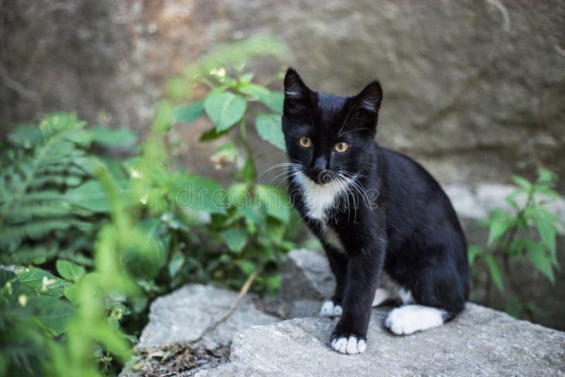 Zwart katje met witte borsten in straat royalty-vrije stock afbeeldingen