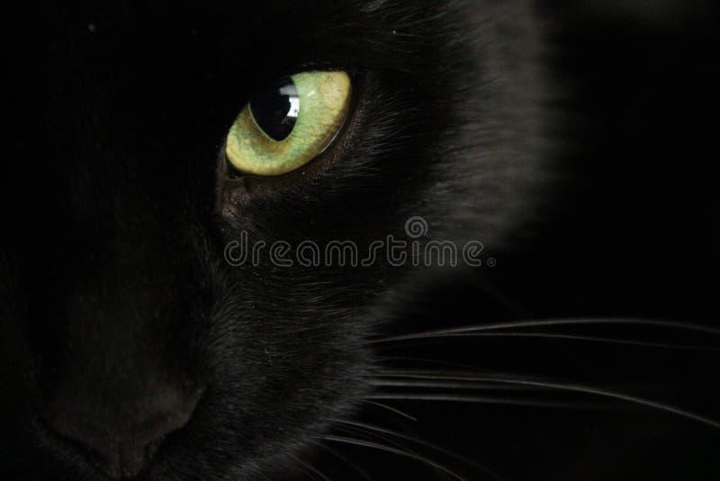 Zwart katten` s geel oog royalty-vrije stock afbeeldingen