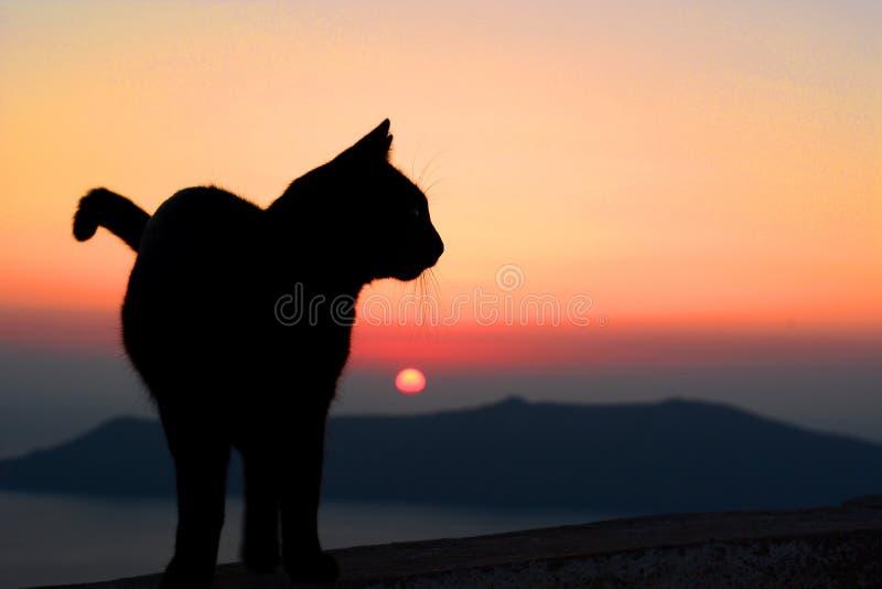 Zwart kattensilhouet bij zonsondergang Santorini, de eilanden van Cycladen Griekenland royalty-vrije stock fotografie