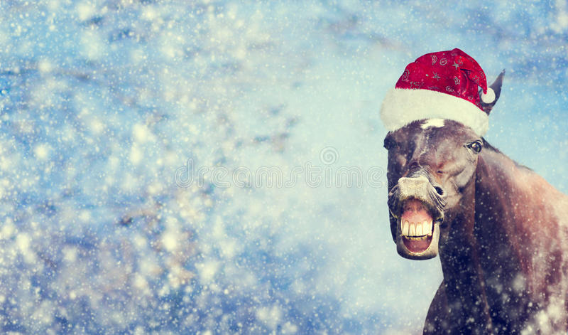 Zwart Kerstmispaard met Kerstmanhoed die en camera op de achtergrond van de wintersneeuwvlokken, banner glimlachen onderzoeken, royalty-vrije stock fotografie
