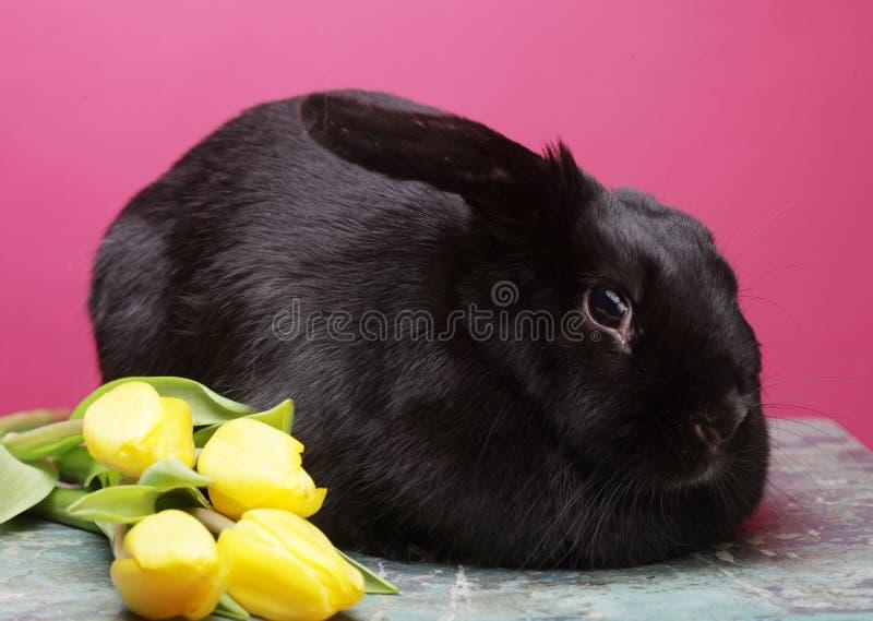 Zwart konijn met gele tulpen royalty-vrije stock foto's