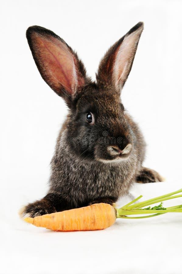 Zwart konijntje royalty-vrije stock foto's