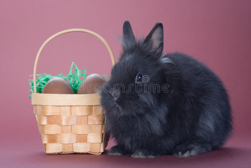 Zwart konijntje met chocoladeeieren royalty-vrije stock foto