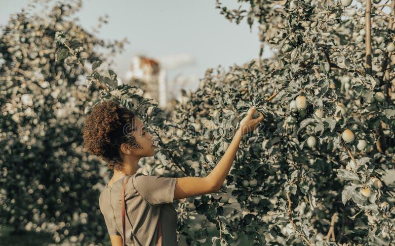 Zwart meisje in de tuin het plukken appel van appelboom royalty-vrije stock foto's