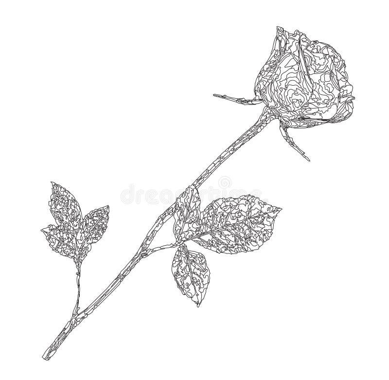 Zwart overzichtssilhouet van roze die bloem op witte backg wordt geïsoleerd royalty-vrije illustratie