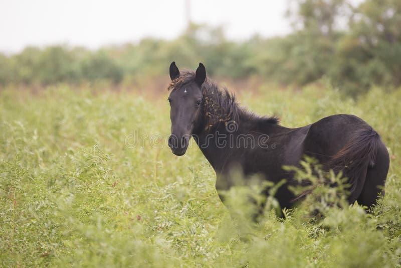 Zwart paard in de weide royalty-vrije stock afbeeldingen