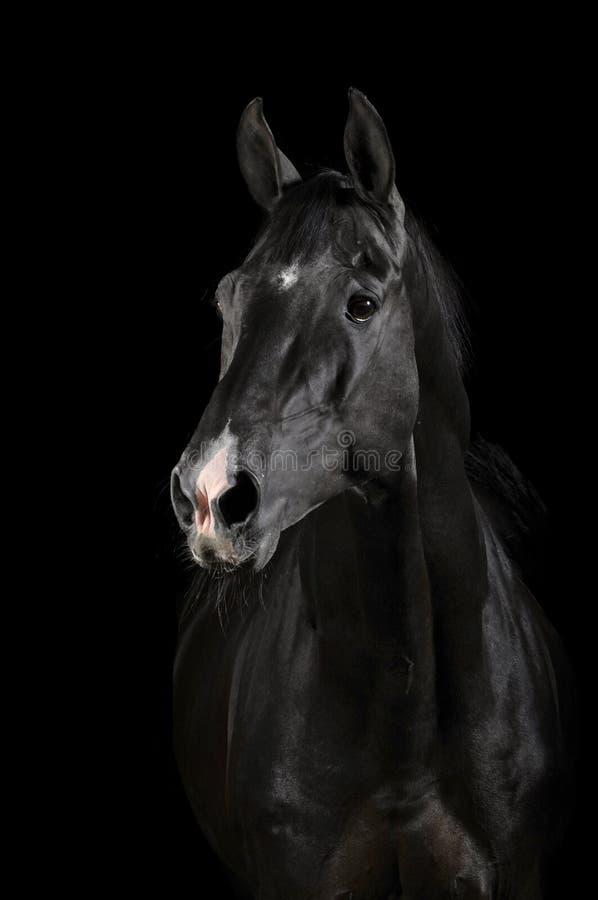 Zwart paard in duisternis royalty-vrije stock afbeelding